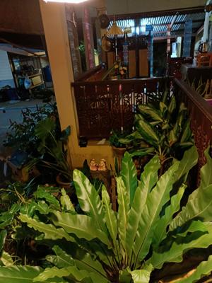 Garden Bua Sawan